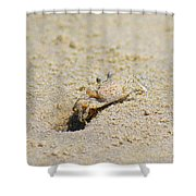 Sand Crab Digging His Hole Shower Curtain