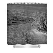 Sand Shrub 3 Shower Curtain