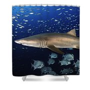 Sand Tiger Shark Swimming In Blue Water Shower Curtain