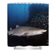 Sand Tiger Shark Swims By The Wreck Shower Curtain