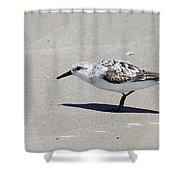 Sanderling On The Beach Shower Curtain