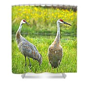 Sandhill Crains 7593 Shower Curtain