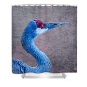 Sandhill Crane 3 Shower Curtain