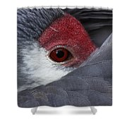 Sandhill Crane At Rest Shower Curtain