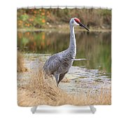 Sandhill Crane Beauty By The Pond Shower Curtain