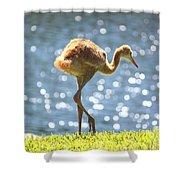 Sandhill Crane Daydreamer Shower Curtain