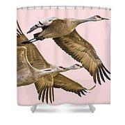 Sandhill Crane Family II Shower Curtain
