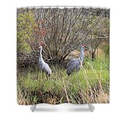 Sandhill Cranes In Colorful Marsh Shower Curtain