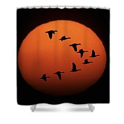 Sandhill Cranes Silhouetted Shower Curtain