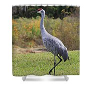 Sandhill In The Grass With Wildflowers Shower Curtain