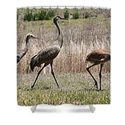 Sandhill Parade Shower Curtain