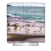 Sandpiper Evening Shower Curtain