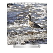 Sandpiper In The Surf Shower Curtain