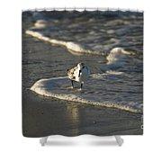 Sandpiper On Beach Shower Curtain