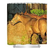 Sandy Eating Hay Shower Curtain