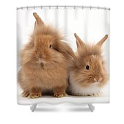 Sandy Lionhead Rabbits Shower Curtain