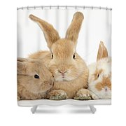 Sandy Rabbit And Babies Shower Curtain