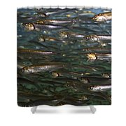 Sardines Anyone Shower Curtain