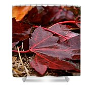 Saturated Maroon Shower Curtain