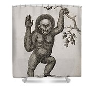Satyrus, Ourang Outang. Pongo Or Jocko Shower Curtain by Ken Welsh