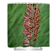 Savannah Ruby Grass Shower Curtain