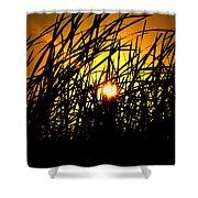 Sawgrass Sunrise Shower Curtain