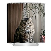 Say Meowww Shower Curtain