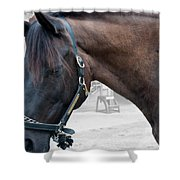 Sc-042-12 Altered Shower Curtain