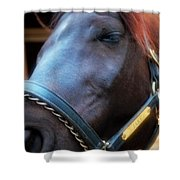 Sc-048-12 Effects Shower Curtain