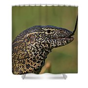 Scales For Breakfast Shower Curtain