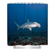 Scalloped Hammerhead Shark Shower Curtain