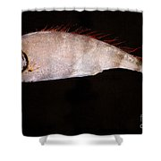 Scalloped Ribbonfish Shower Curtain