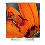 Scarab Beetle On A Guzmania Flower Shower Curtain