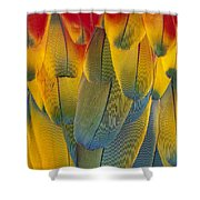 Scarlet Macaw Ara Macao Close-up Shower Curtain