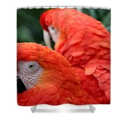 Scarlet Macaws Shower Curtain