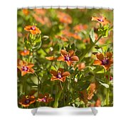 Scarlet Pimpernel Shower Curtain