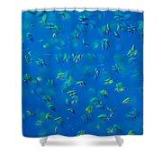 Scenedesmus Sp. Algae, Lm Shower Curtain