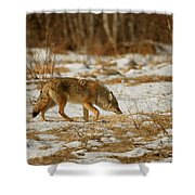 Scent Of A Doe Shower Curtain
