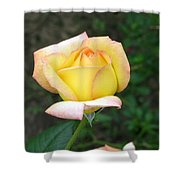 Scent Of A Rosebud Shower Curtain
