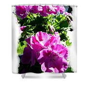 Scented Geraniums Shower Curtain