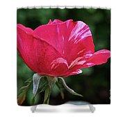 Scentimental Pink Shower Curtain