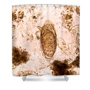 Schistosome Egg Shower Curtain