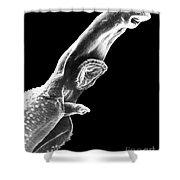 Schistosome Shower Curtain