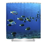 School Of Surgeonfish, Christmas Shower Curtain
