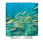 Schooling Bigeye Snappers Shower Curtain