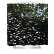 Schooling Fish Under Red Mangrove  Shower Curtain