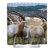 Scimitar-horned Oryx Shower Curtain