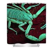 Scorpion Glows In Uv Light Costa Rica Shower Curtain