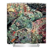 Scorpionfish Shower Curtain