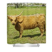 Scottish Highland Cow In Farm Field Maine Shower Curtain